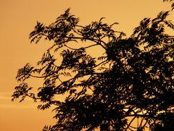 dark tree branches at golden sunset sky