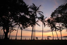 silhouettes of palm trees at sunset in Kota Kinabalu