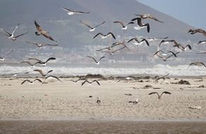 a flock of seagulls flying over the beach