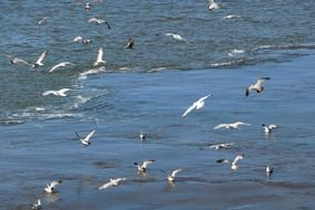 lot of seagulls over the ocean