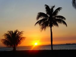 Palm trees on the beach and sunset