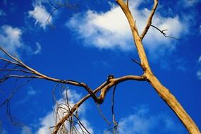 dry strange tree branches in the blue sky