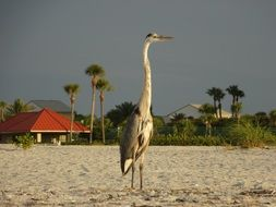 tropical heron on the beach