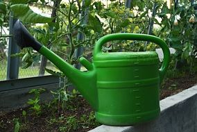 green jug for watering in the greenhouse