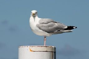 seagull on a metal post