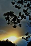 dark branches at diffused sunset glow