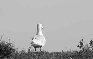 black and white photo of a seagull on the shore