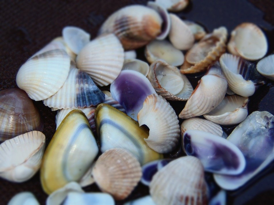 colored sea shells