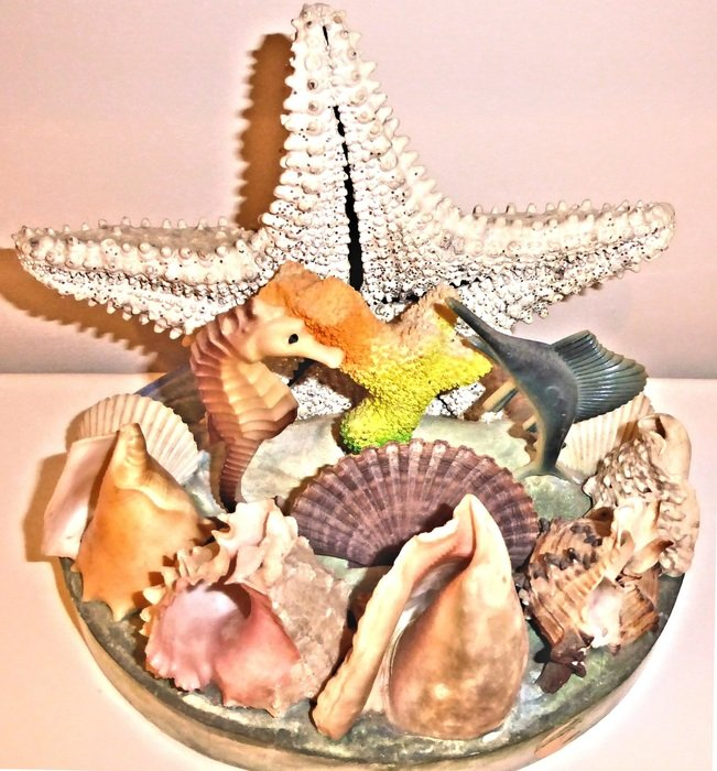 authentic sea shells