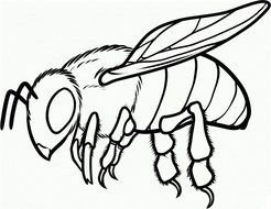 insect as a picture for clipart