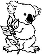 Koala holds twig, drawing