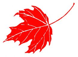 painted red maple leaf with white veins