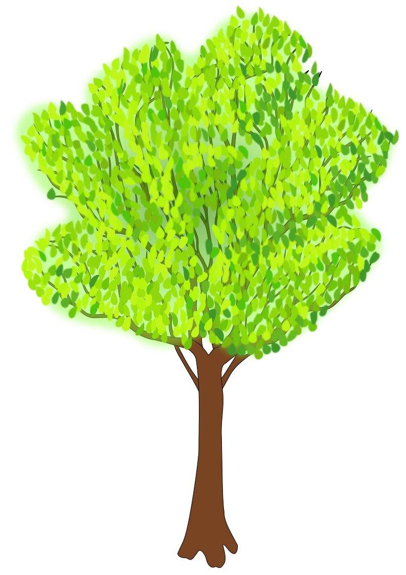 Cartoon Tree Outline Drawing Free Image Tree clipart leave a comment. cartoon tree outline drawing
