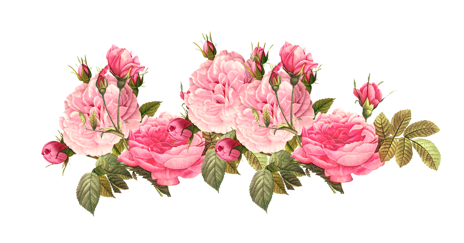 Vintage Rose Png Pink Roses Free Image