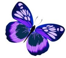 purple butterfly on a white background