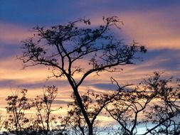 sunset sky clouds afterglow tree N5