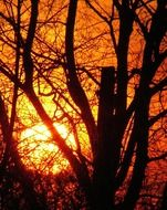 bright sun in the bare branches of a tree