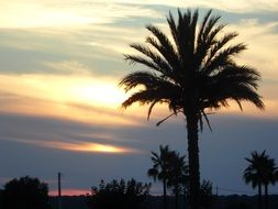 silhouettes of palm trees in the glow of sunset
