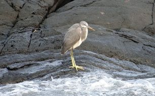 heron stands on a rock near the water