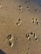 footprints on the wet sand of the beach in the sun