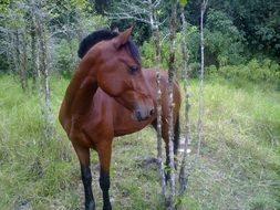 brown graceful horse in nature