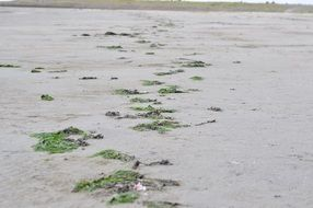 seaweed on the sandy beach
