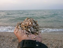 seashells lie in the palm of your hand