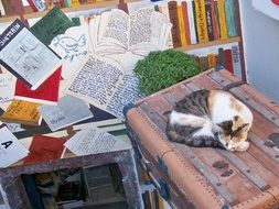 tricolor cat rests on suitcase at painted wall