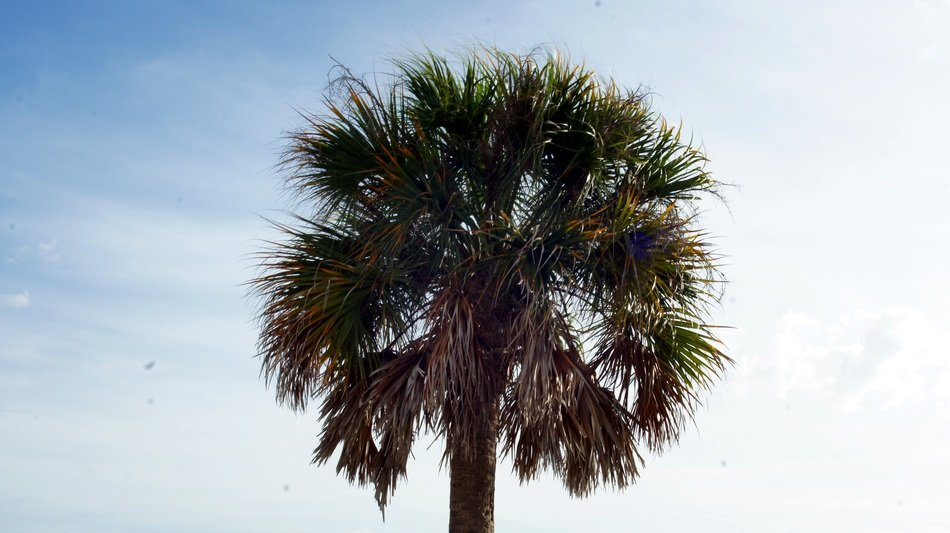 Palm tree in Florida in summer