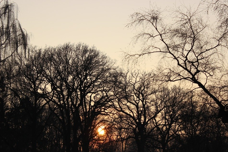 orange setting sun in the silhouettes of trees