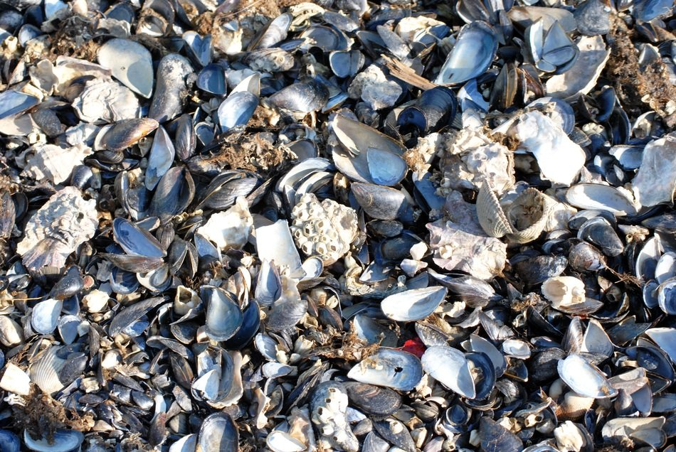 Seashells in Italy