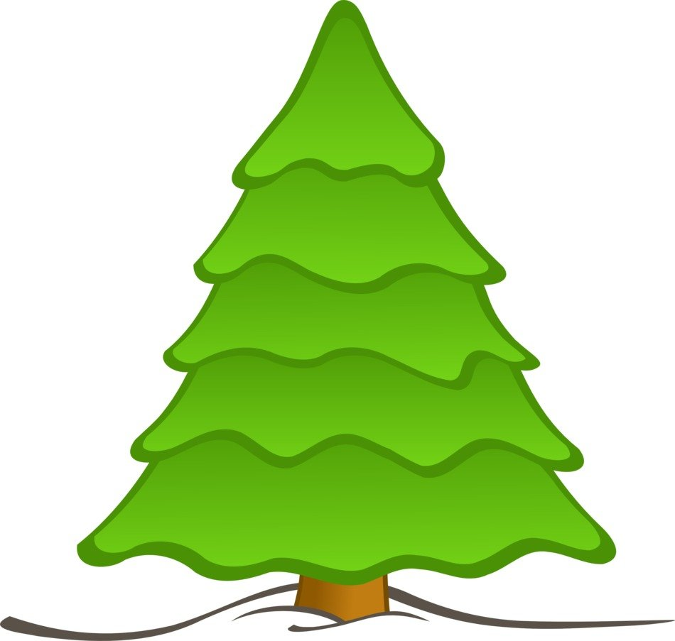 isolated green Christmas tree