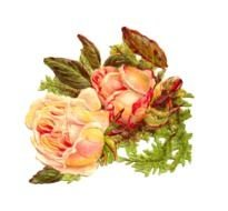 Antique Images Rose 2 Yellow Digital Scrap