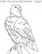 clipart of Black and white drawing of the eagle bird