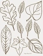 black and white drawings of leaves