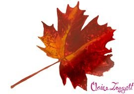 clipart of the Autumn Leaf