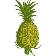 Pineapple 1 500&215500 clipart