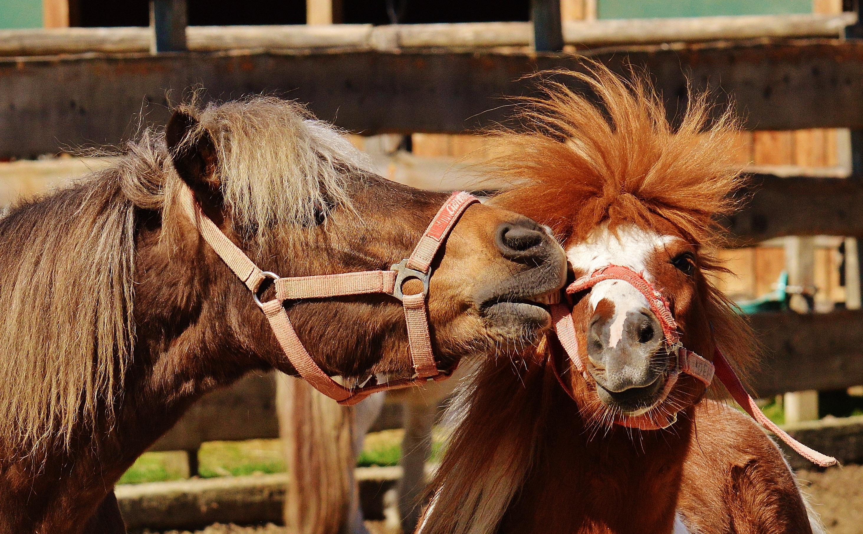 Прикольная картинка лошадь, поздравления
