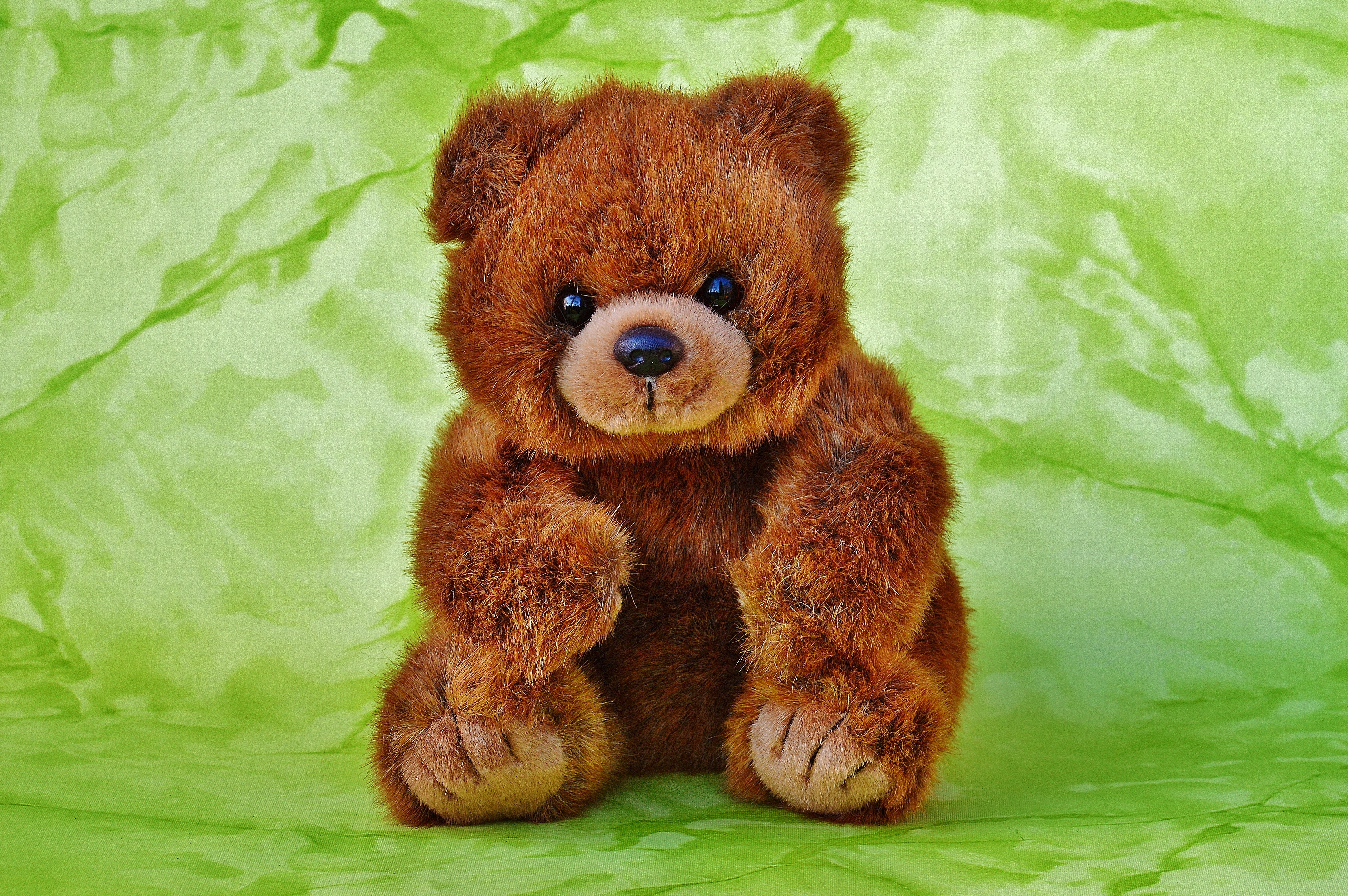 Pictures of brown teddy bears