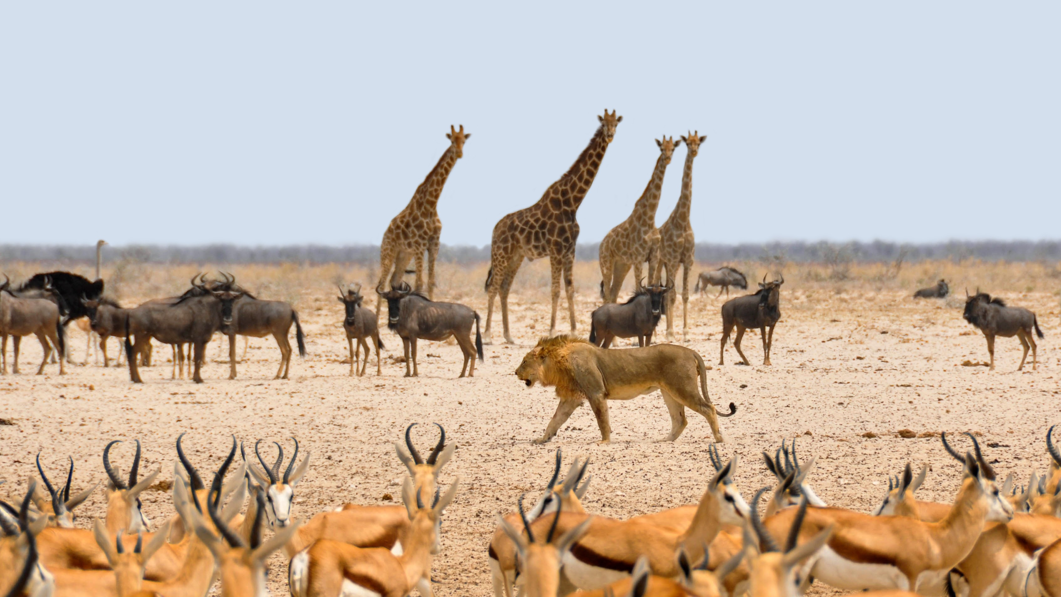 Wild animals in the national park in Namibia free image