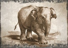 elephant drawing in wildlife