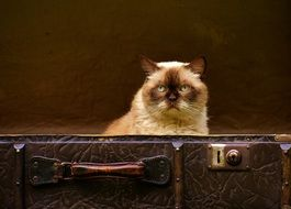 Cat in a suitcase sitting and watching