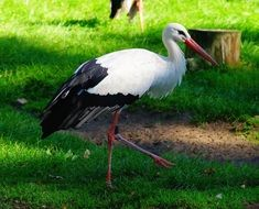 Bird Stork Animal Rattle Stork