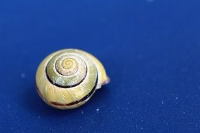 snail shell on the blue background