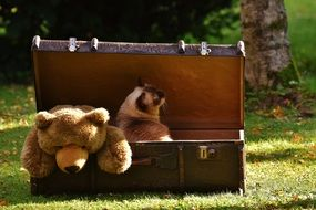 cat and teddy bear in a suitcase
