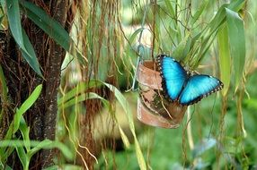 blue butterfly on a green plant