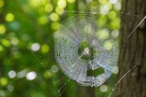 spider web with spider in the center