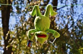 green frog hanging on a rope