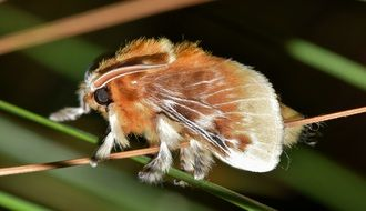 close-up southern flannel moth