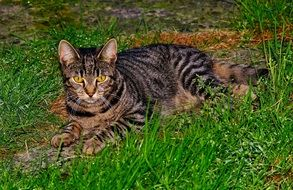 Domestic cat on the grass